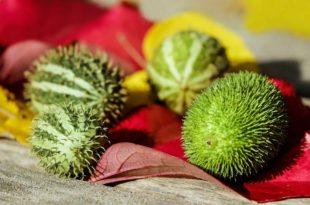 Fünf kohlenhydratarme Lebensmittel, die Deine Definitionsphase, sowie Deine Diät unterstützen