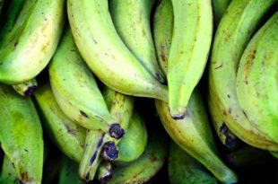 Rezept: Bananen-Shake zum Sattmachen